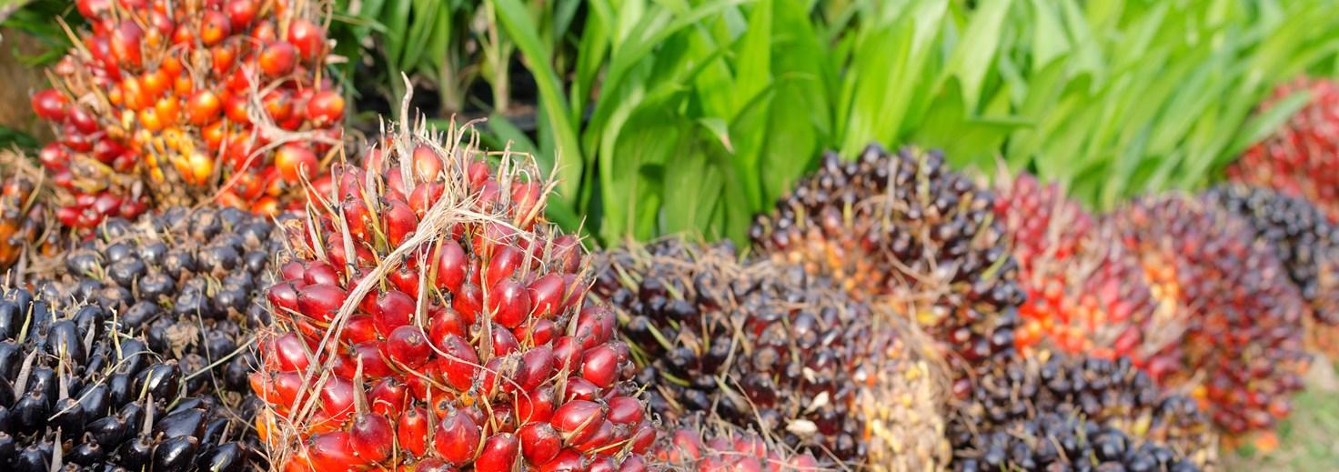 Palsgaard使用可持续来源的棕榈油生产其活化蛋糕乳化剂