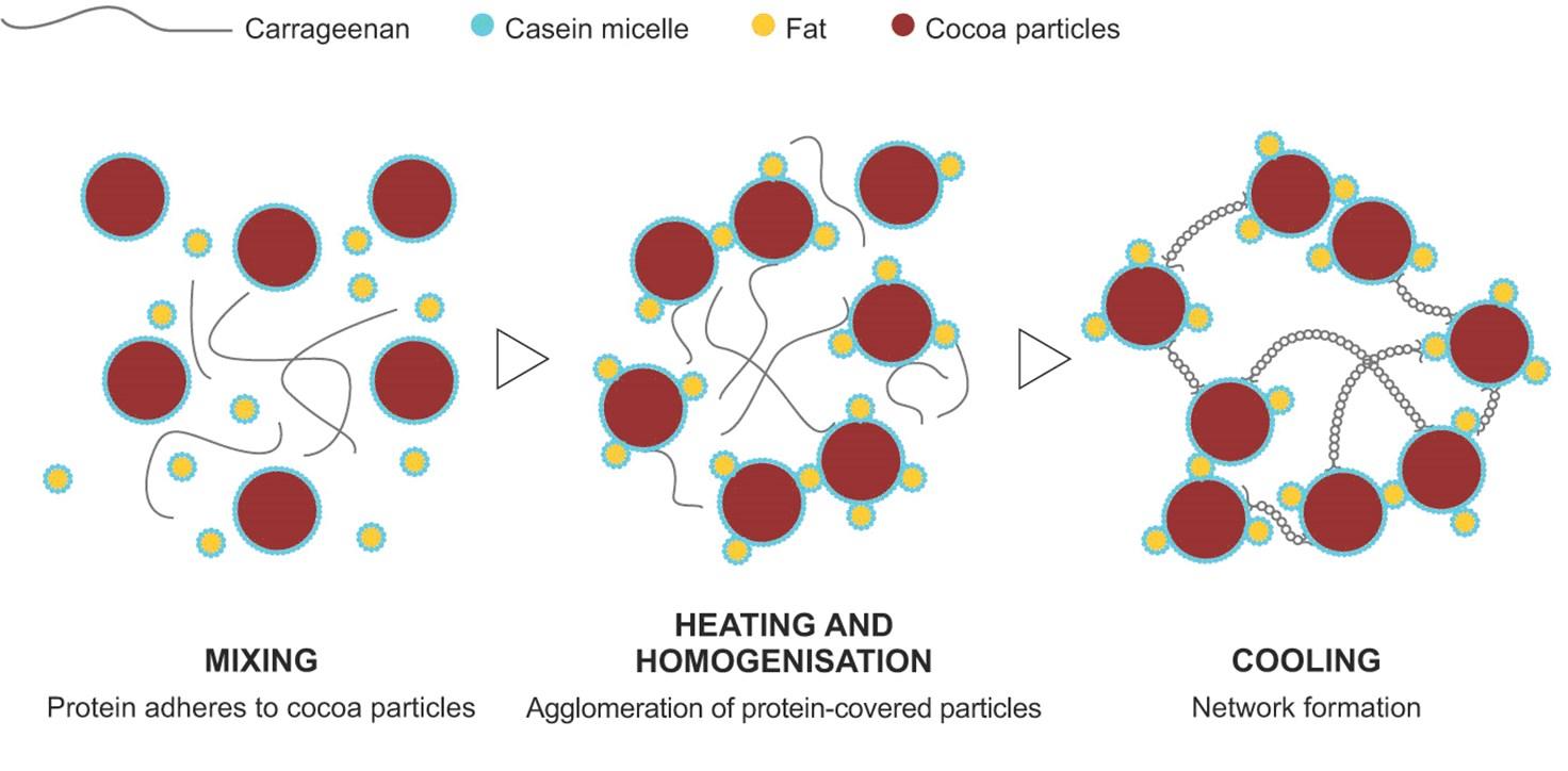 图1卡拉胶网络在巧克力牛奶中的形成