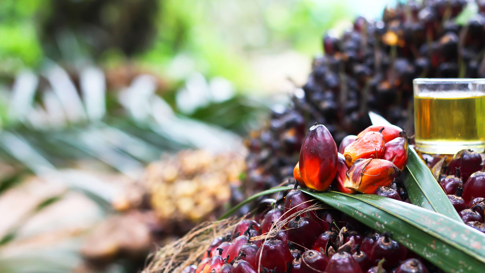 Awareness Raising Activities Increase Requests For Certified Sustainable Palm Oil From Palsgaard In 2018